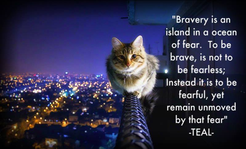 How are you brave?